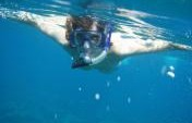 Snorkeling on Maui &#8211; A Must Try