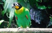 Brazil: A Bird-Watching Paradise