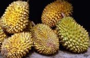The Many Weird Fruits of Southeast Asia
