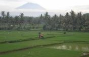 The Irrigation – Bali, Indonesia