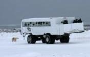 Churchill, Canada, Polar Bear Capital