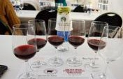 Seven Reasons to Attend the Beaver Creek Wine and Spirits Festival