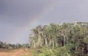 Chasing Rainbows – French Guiana (3 of 3)