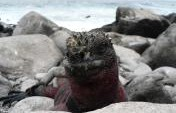 The Seven Animal Wonders of The Galapagos Islands