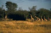 Africa&#8217;s Lesser-Known Park