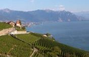 A Grape Surprise – Swiss Alps