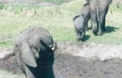 Into Africa – Kenya
