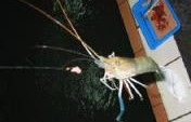 Murderous Shrimping Date &#8211; Taipei, Taiwan