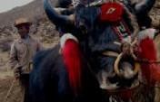 Yak Butter Tea – Tidrum, Tibet