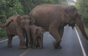 When Elephants Attack – Khao Yai National Park, Thailand