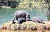 Big Brother's African Brother #50: Mlilwane Wildlife Sanctuary, Swaziland
