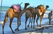 Kenya for the Indie Traveler