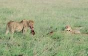 Of Soul-Homes, Sky-Temples and Safaris: Part 4 – Masai Mara, Kenya