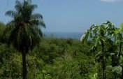 T&T&T (Trinidad, Tobago, and Turtles) – Trinidad & Tobago