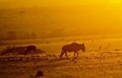 How To Photograph Your African Safari
