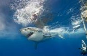 Overcoming Fear and Making a Shark Movie in Guadalupe Island, Mexico
