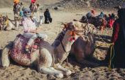 Overland Egypt: Notes for Women Traveling Alone