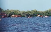 Where Flamingoes Go To Heaven: Celestún Eager Estuary – Celestún, Mexico