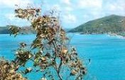 Cruising, Part 2: Tortola,The Island For Me – Caribbean