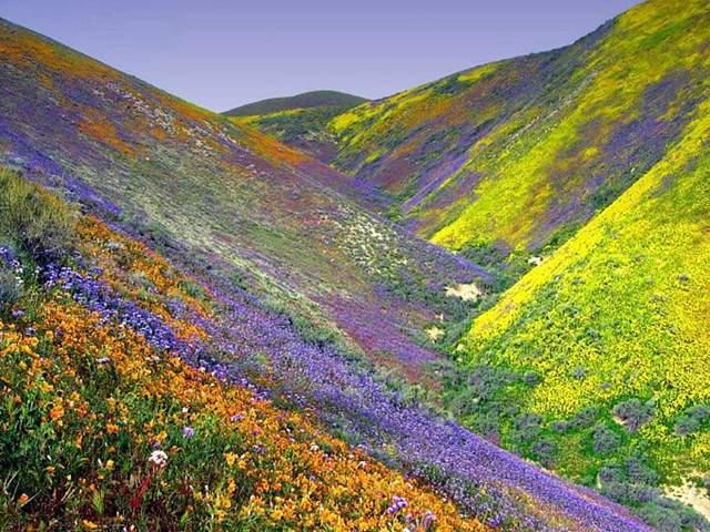 Beautiful World: Top 10 Beautiful garden